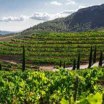 Which wineries to visit in Priorat