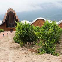 Private Winery Tour in Rioja