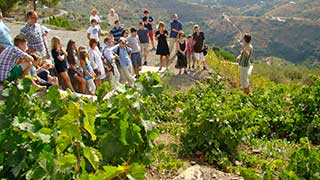 Wine Tour from Malaga