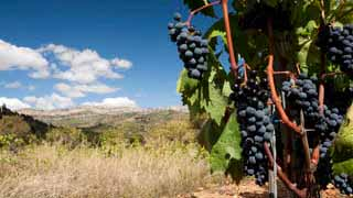 Tour from Barcelona to Priorat