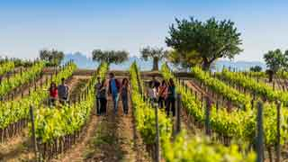 Wine tour to Penedes