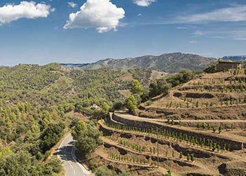 Best wineries to visit in Spain